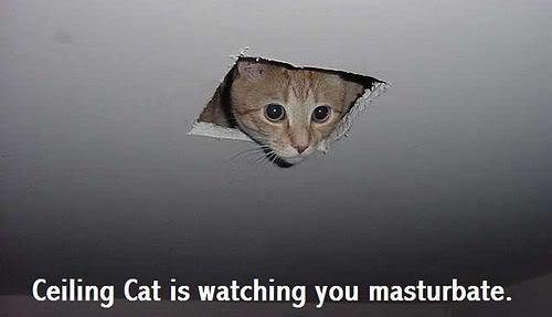 The original ceiling cat image, this is what started it all!