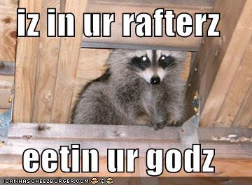Racoon God Killer